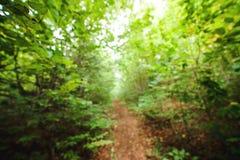 Abstrakt bakgrund med den suddiga gröna skogen, träd och sidor Royaltyfri Fotografi