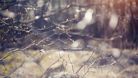Abstrakt bakgrund med filialer av hagtorn Royaltyfria Bilder