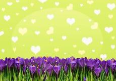 Abstrakt bakgrund med krokusar för lycklig valentin för hälsningar Royaltyfria Bilder