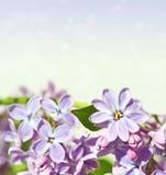 Abstrakt bakgrund med med lilor för hälsningar lyckliga Valent Royaltyfria Bilder