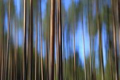 Abstrakt bakgrund med pinjeskogen och himmel Royaltyfri Fotografi