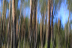 Abstrakt bakgrund med sörjer träd och himmel Arkivfoton