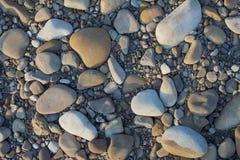 Abstrakt bakgrund med torra den stora grå färgrundan och det reeble lilla havet Royaltyfria Bilder