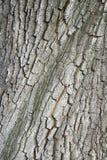 Abstrakt bakgrund med trädskället Arkivbilder