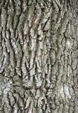 Abstrakt bakgrund med trädskället Royaltyfria Foton