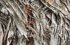 Abstrakt bakgrund med trädskället Arkivfoto