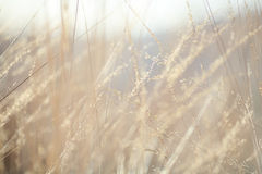 Abstrakt bakgrund: naturhöstgräs Royaltyfria Bilder