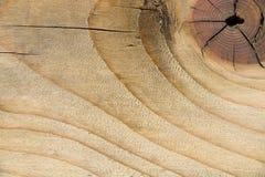 Abstrakt bakgrund, textur av gammalt gnarl trä har grov yttersida, selektiv fokus Royaltyfri Foto