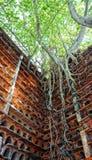Abstrakt bakgrund, trädstam, rotar, det röda redet Royaltyfria Foton