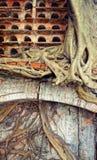 Abstrakt bakgrund, trädstam, rotar, det röda redet Arkivbild
