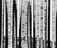 abstrakt bakgrundsbambuexponeringsglas Royaltyfri Fotografi