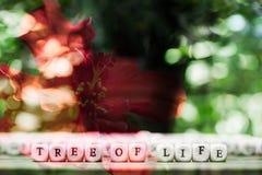 abstrakt bakgrundsblomma Blommor som göras med färgfilter Arkivbild