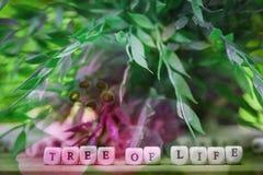 abstrakt bakgrundsblomma Blommor som göras med färgfilter Arkivfoton