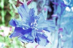 abstrakt bakgrundsblomma Blommor som göras med färgfilter Royaltyfri Fotografi