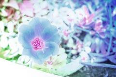 abstrakt bakgrundsblomma Blommor som göras med färgfilter Royaltyfri Bild