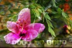abstrakt bakgrundsblomma Blommor som göras med färgfilter Arkivfoto