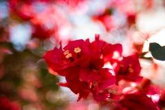 abstrakt bakgrundsblommafjäder Royaltyfria Foton
