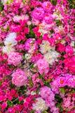 abstrakt bakgrundsblommor Royaltyfri Bild