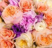 abstrakt bakgrundsblommor Närbild Royaltyfria Bilder