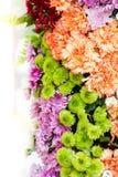 abstrakt bakgrundsblommor Närbild Fotografering för Bildbyråer