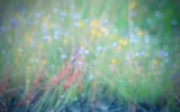 abstrakt bakgrundsblur Färgrika blommor och grön sidasuddighet Royaltyfri Bild
