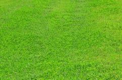 abstrakt bakgrundsgräsgreen Royaltyfria Bilder