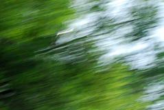 abstrakt bakgrundsgreen Royaltyfri Foto