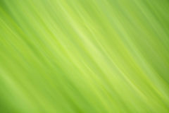 abstrakt bakgrundsgreen Royaltyfria Foton