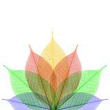 abstrakt bakgrundsleafskelett Royaltyfri Bild
