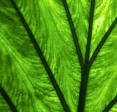 Abstrakt bakgrundsmakroslut upp av en gräsplan Royaltyfri Bild