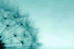 abstrakt bakgrundsmaskros Abstrakt makrofoto av växtse Arkivfoto