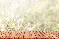 abstrakt bakgrundsnatur Fotografering för Bildbyråer
