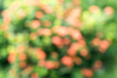 abstrakt bakgrundsnatur Royaltyfria Bilder