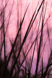abstrakt bakgrundsnatur Royaltyfri Fotografi