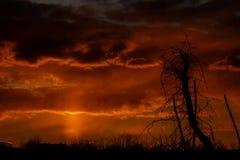 abstrakt bakgrundsnatur Dramatiska och lynniga rosa färger, purpurfärgad molnig solnedgånghimmel Arkivbilder