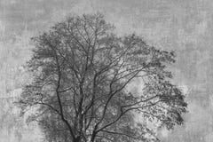 abstrakt bakgrundssilhouettetree Royaltyfri Bild