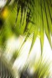 abstrakt bakgrundsskog Royaltyfri Fotografi