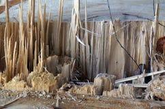 abstrakt bakgrundsskog Brooken trä trauma skarpt wood torso arkivfoton