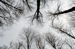 abstrakt bakgrundstree Royaltyfri Foto