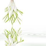 abstrakt bambugräsleaf Arkivbild