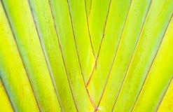 Abstrakt bananträd Royaltyfria Foton