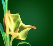 abstrakt barwiący kwiat Obrazy Royalty Free