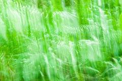 Abstrakt bedöva buske Royaltyfria Bilder