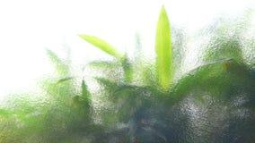 Abstrakt begrepp av bambusidor Arkivfoton