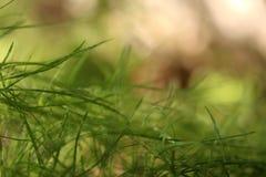 Abstrakt begrepp av botgräsplanörter Royaltyfri Fotografi