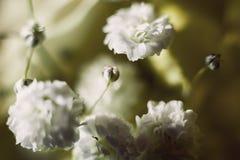 Abstrakt begrepp av dekorativa blommor Royaltyfri Bild