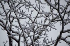 Abstrakt begrepp av den snö laden björken förgrena sig se upp closeupen Arkivbilder