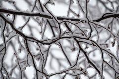 Abstrakt begrepp av den snö laden björken förgrena sig se upp closeupen Arkivbild