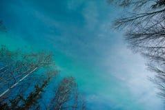 Abstrakt begrepp av det gröna norrskenet och silhouetted träd för vit björk royaltyfri fotografi