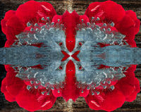 Abstrakt begrepp av en krönad pidgeon på en röd ros texturerade bakgrund Arkivbilder